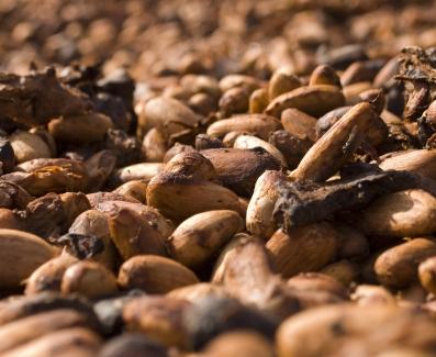 fêves de cacao, d'origines diverses, mélangées dans le mélangeur mixte EGRETIER